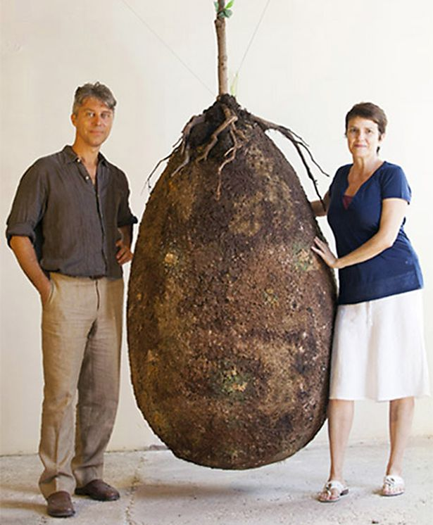 Organic-burial-pods-will-turn-your-loved-one-into-a-tree